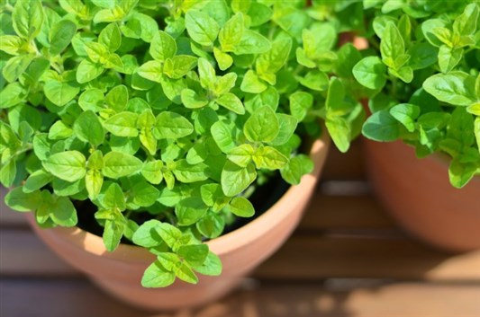 وصفة رائعة تساعد على الحمل تأخر الحمل والإنجاب أعشاب طبيعية للحمل