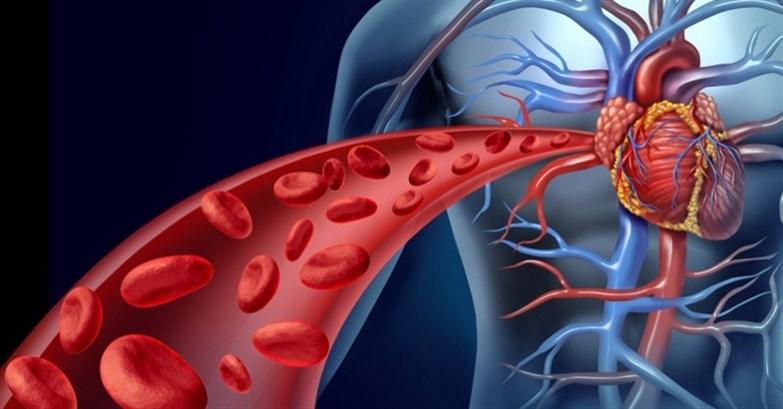 تحسين الدّورة الدمويّة