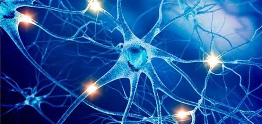 مُفيدة للجهاز العصبي والذاكرة