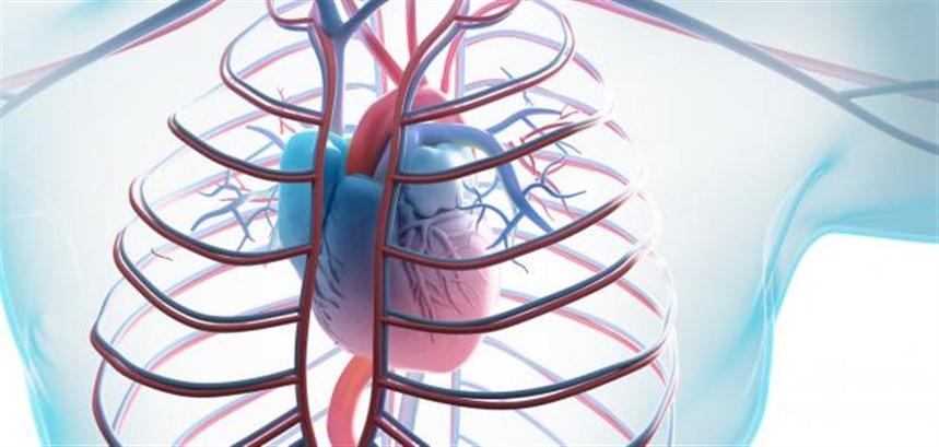 مشاكل القلب والشرايين