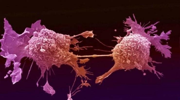 السيطرة على السرطان