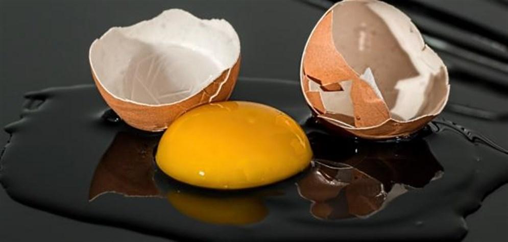 صفار البيض