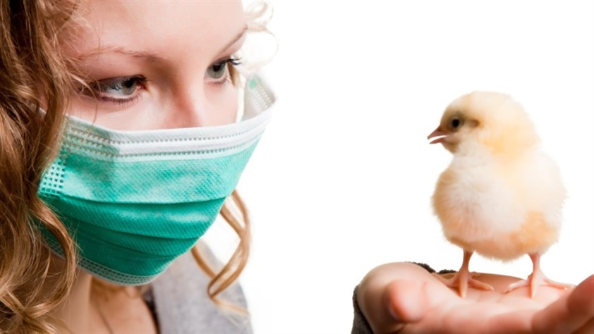 انفلونزا الطيور اعراضها