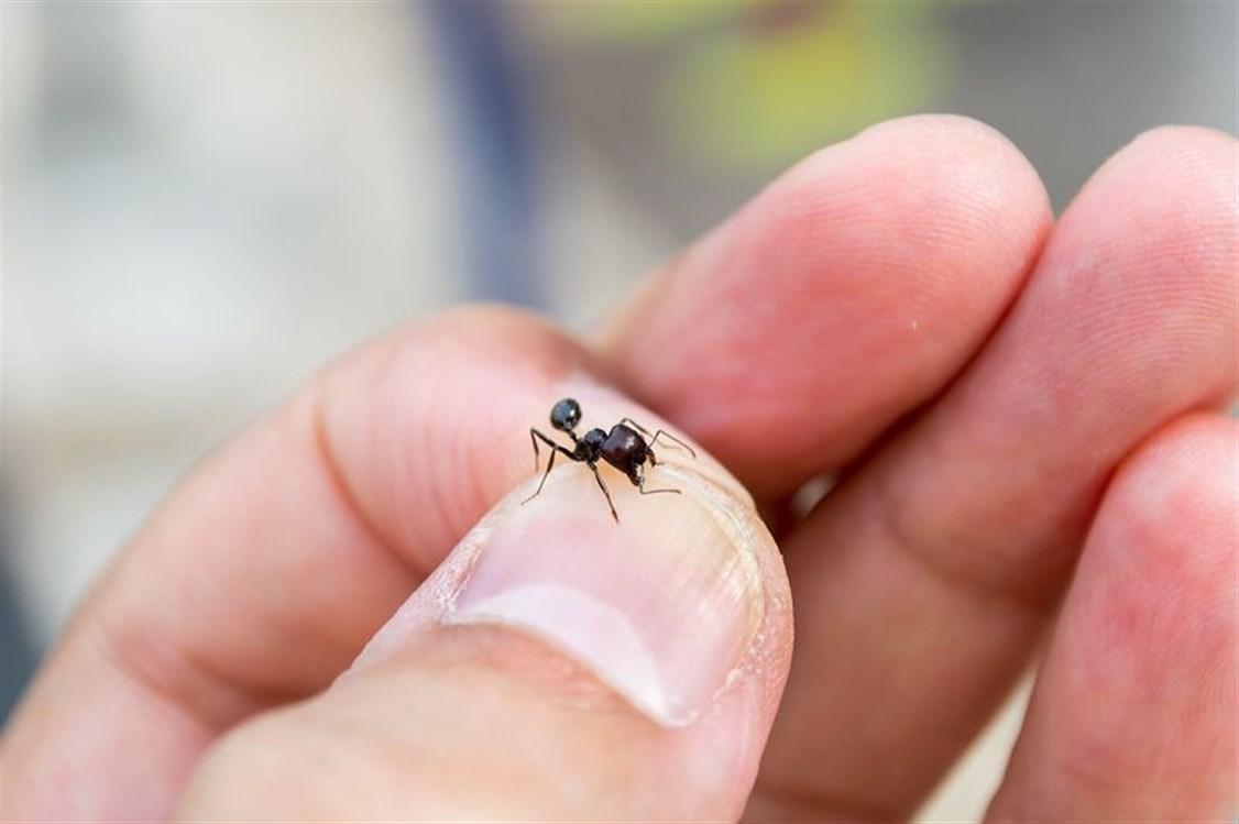 Sohati تنبهوا الى هذه الاعراض التي تشير الى تعر ضكم لقرصة نمل